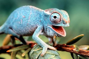 funny lizard pictures