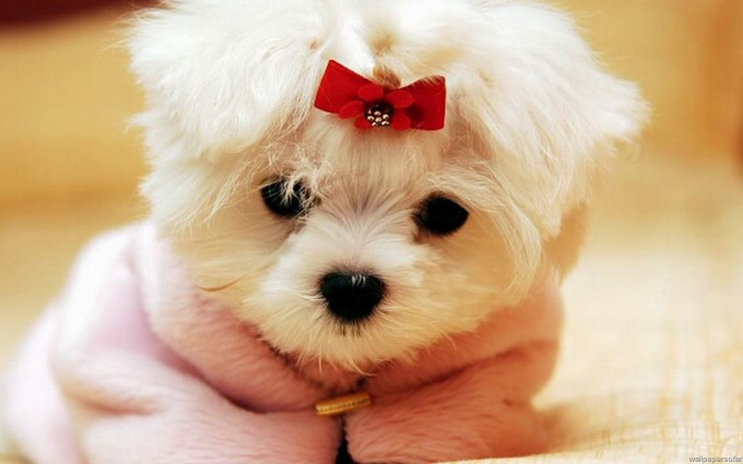 funny puppy wallpapers