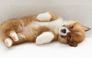 funny puppy wallpapers A2