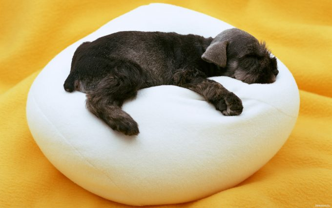 funny puppy wallpapers A3