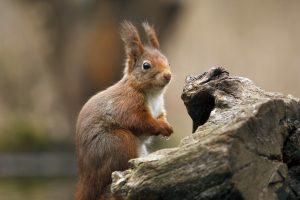 funny squirrel photos
