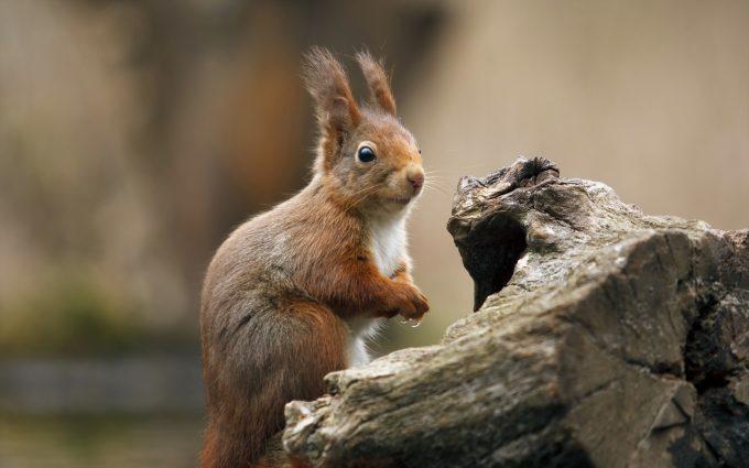 funny squirrel photos