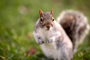 funny squirrel pics