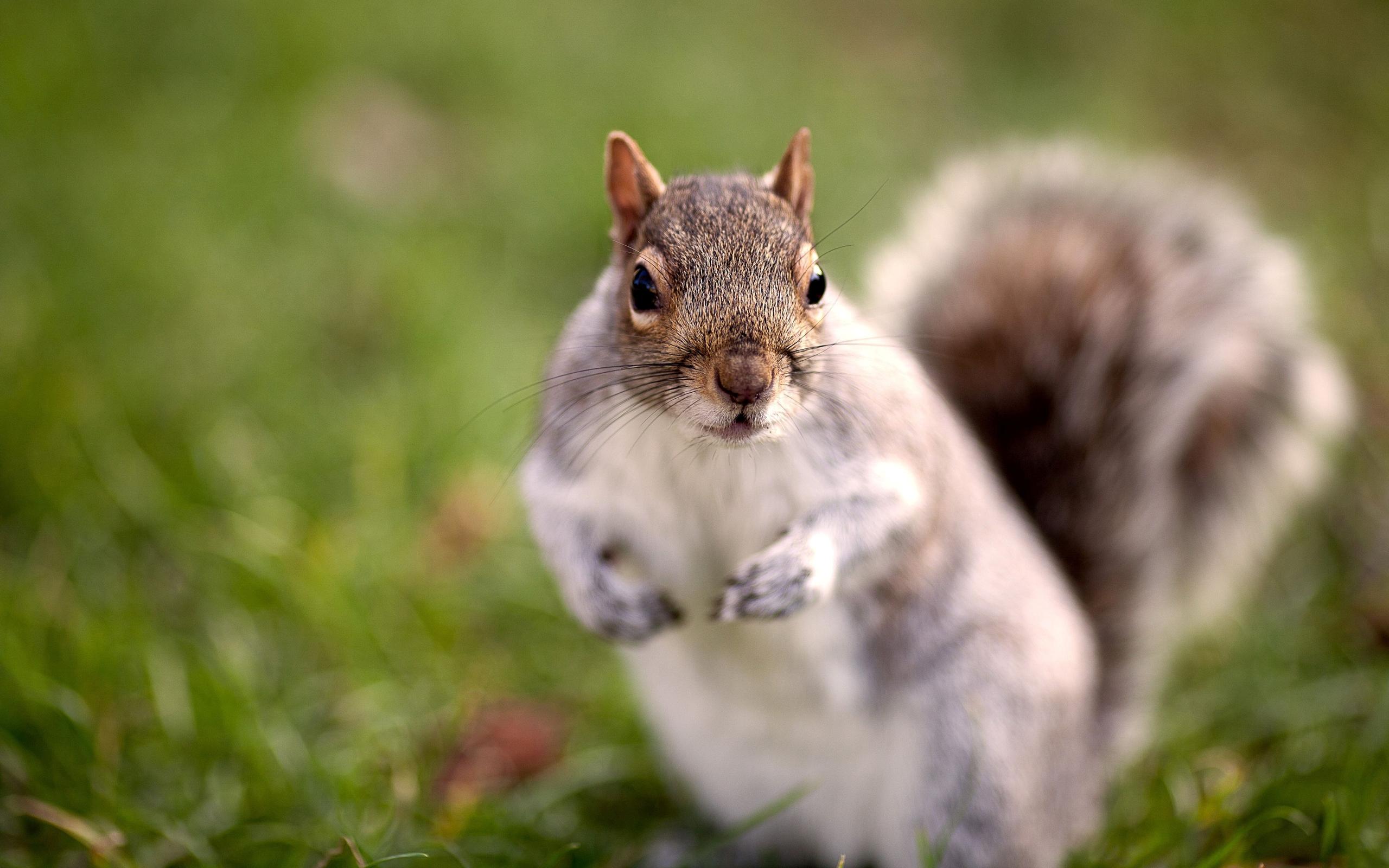 funny squirrel pics