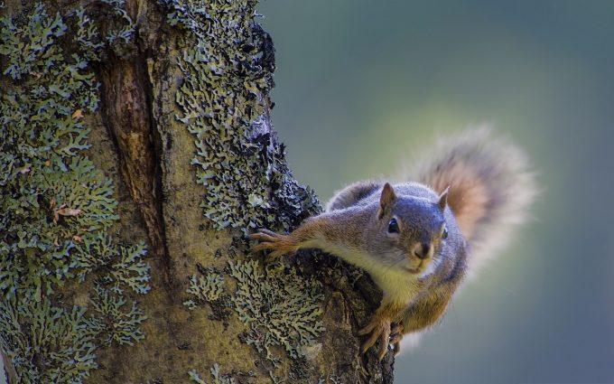 funny squirrel pictures facebook