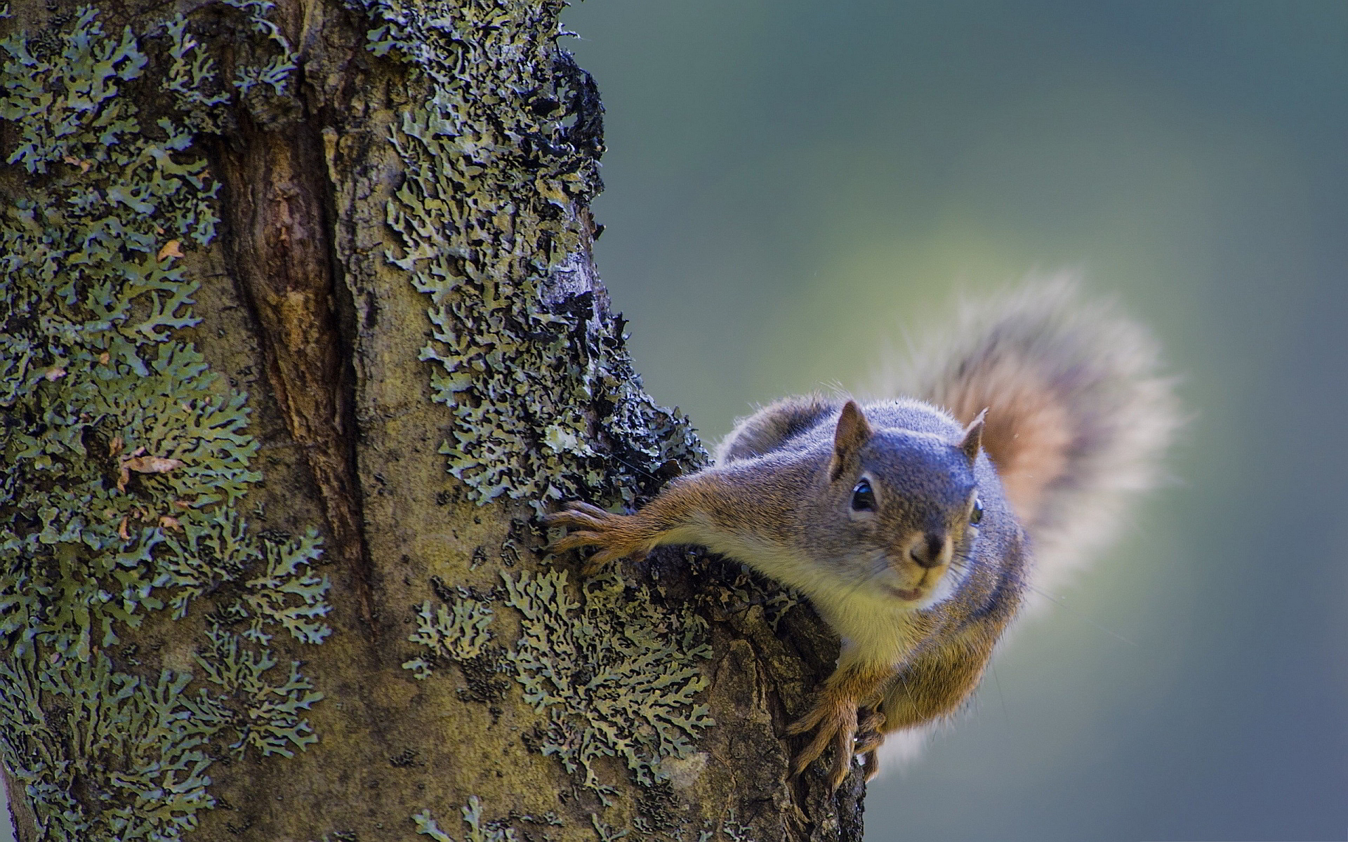 funny squirrel pictures facebook - HD Desktop Wallpapers ...