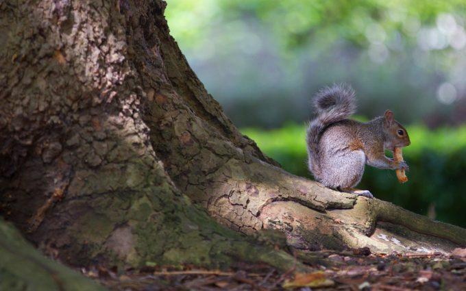 funny squirrel wallpaper