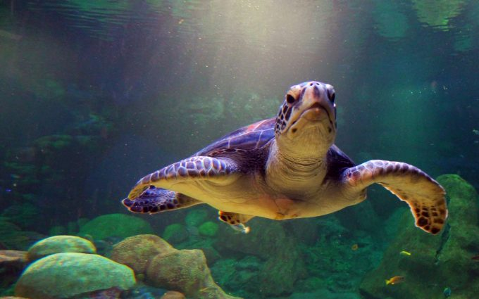 funny turtle pictures