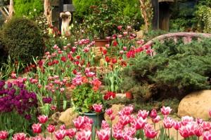 garden flower wallpaper