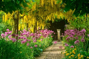 garden images hd