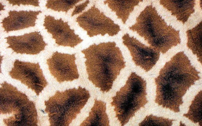 giraffe print background