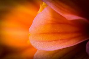 golden flower petals
