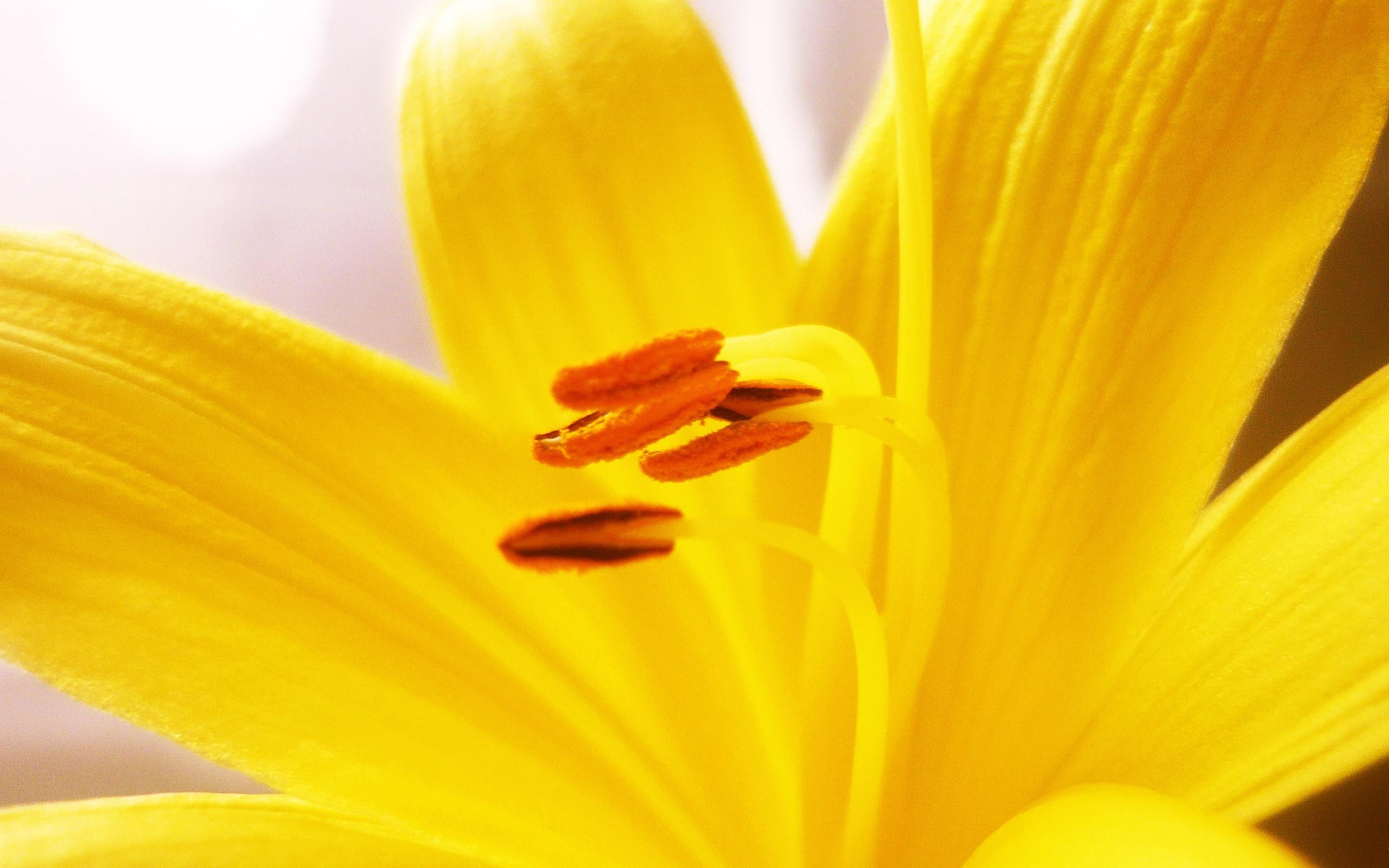 golden flower petals - HD Desktop Wallpapers | 4k HD