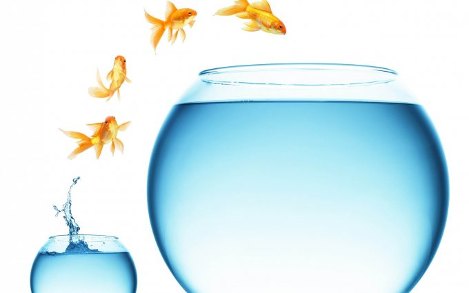 goldfish wallpaper aquarium