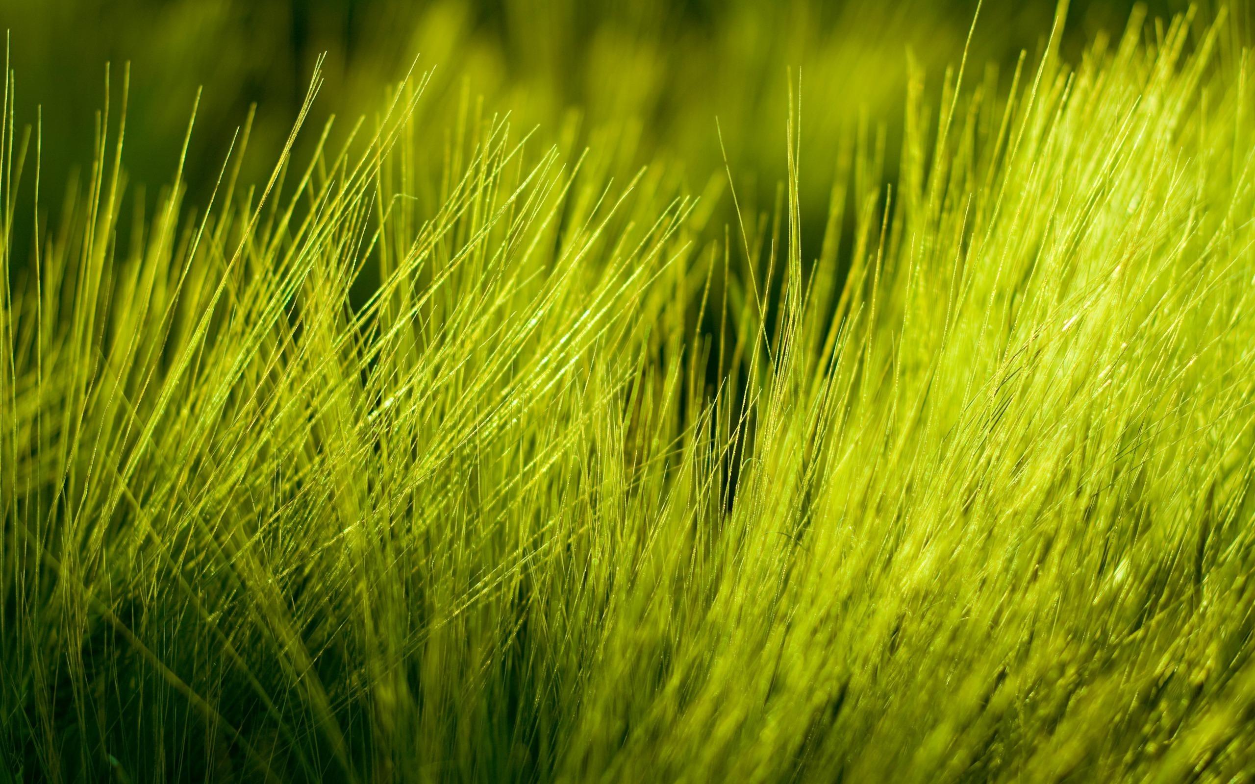 grass images computer