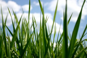 grass nature backgrounds