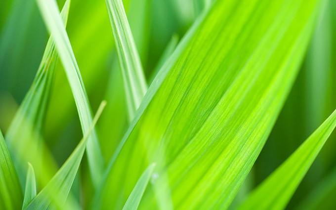 grass photo background
