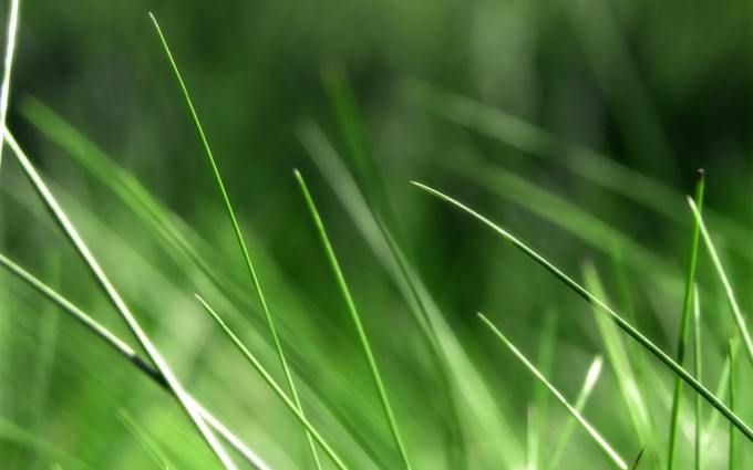 grass photo green