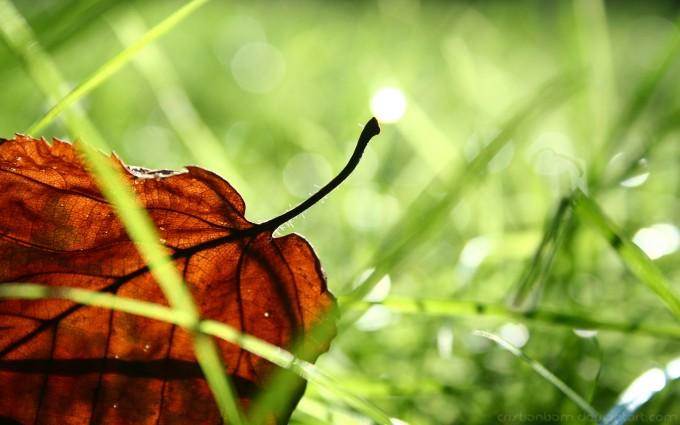 grass photo leaf