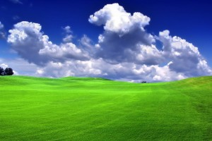 grass photo windows