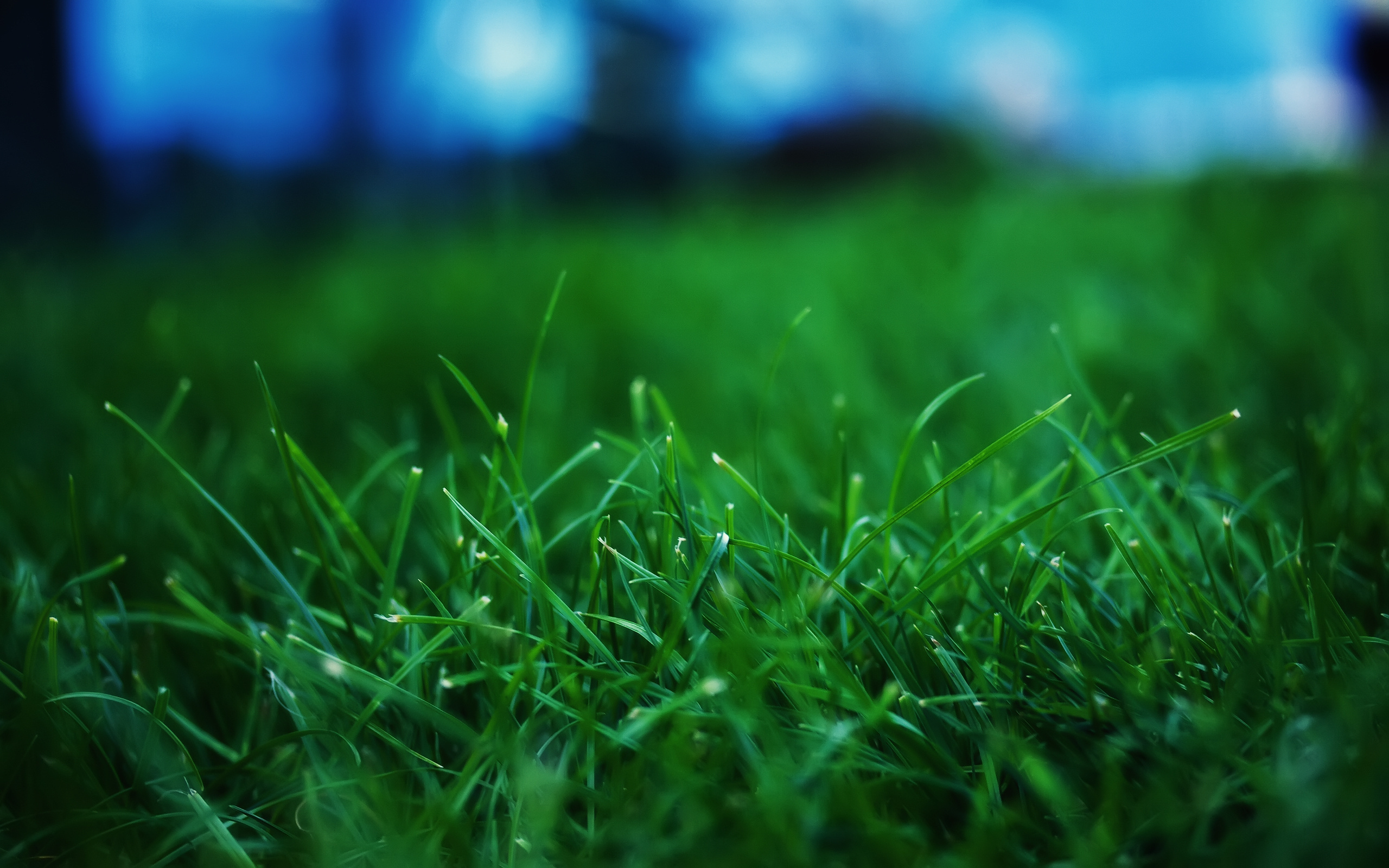 grass pictures cute