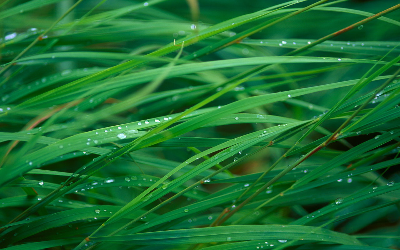 grass pictures dew drops