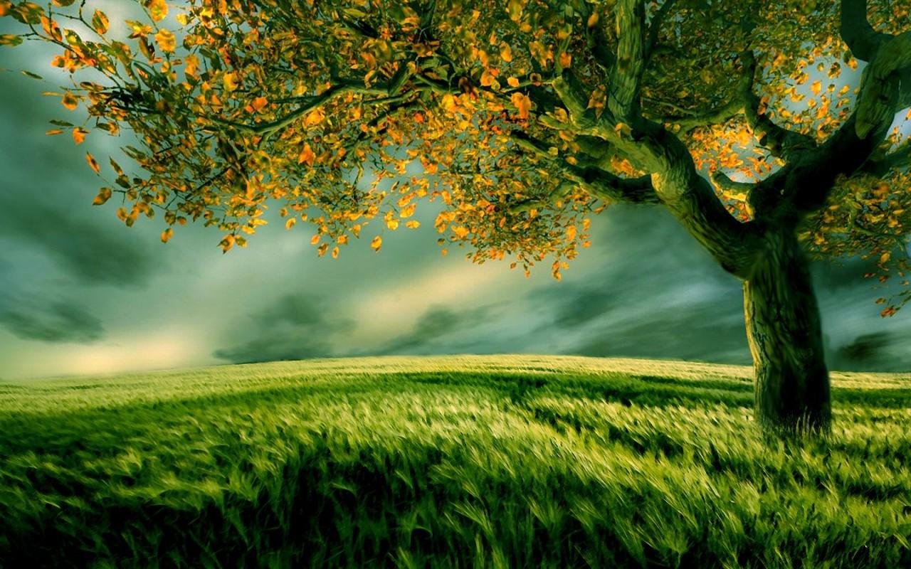 grass pictures landscape