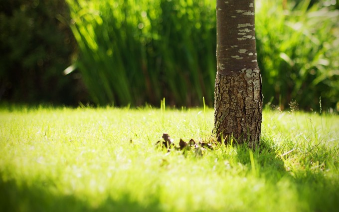 grass pictures tree