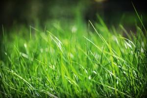 grass wallpaper 1080p
