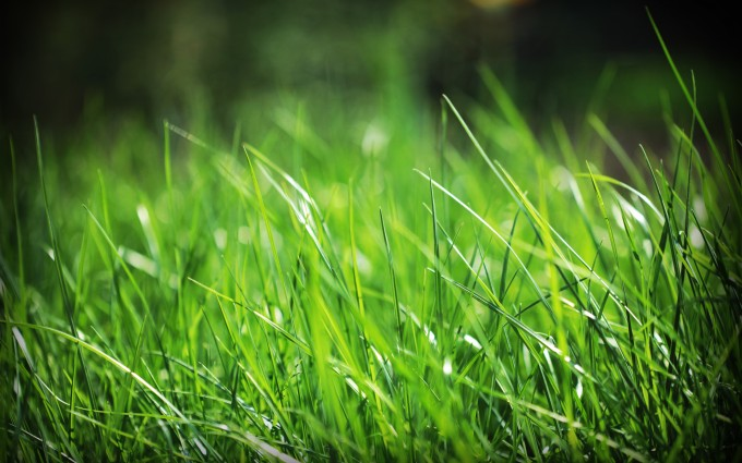 grass wallpaper 1080p