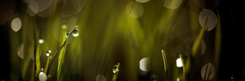 abstract grass wallpaper - photo #13