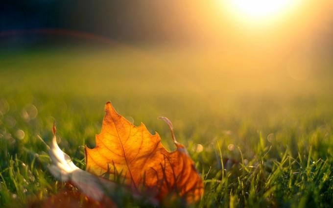 grass wallpaper autumn hd