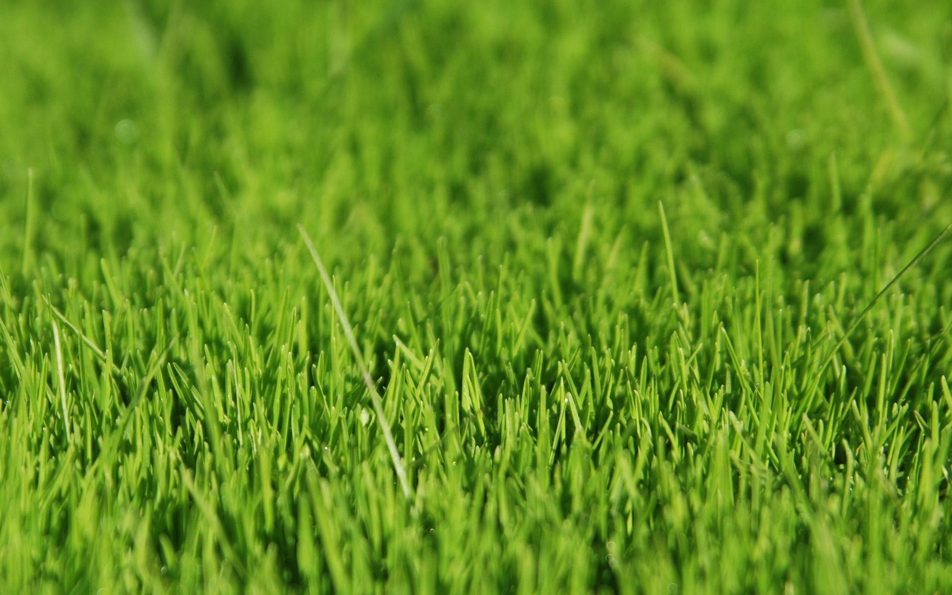 grass wallpaper background