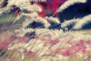 grass wallpaper beautiful