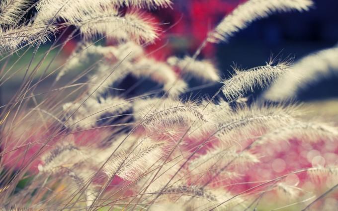 grass wallpaper beautiful