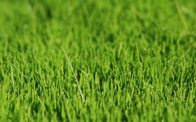 grass wallpaper close up