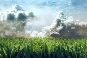 grass wallpaper clouds