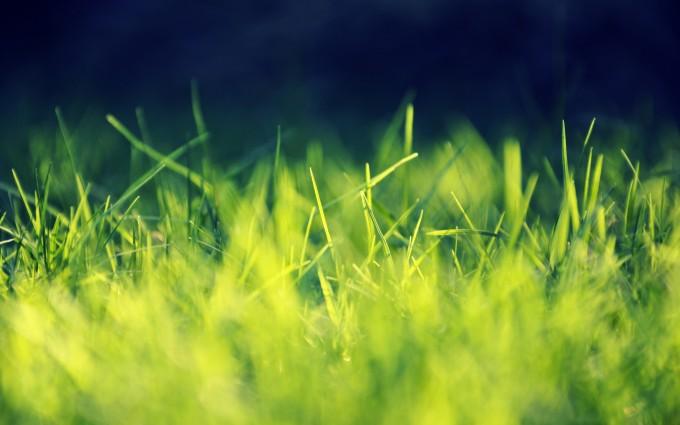 grass wallpaper cool