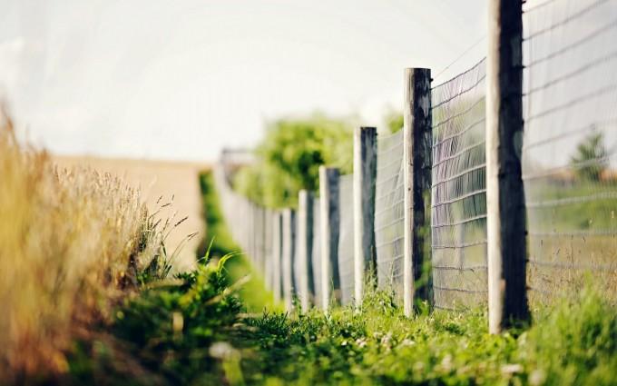 grass wallpaper desktop