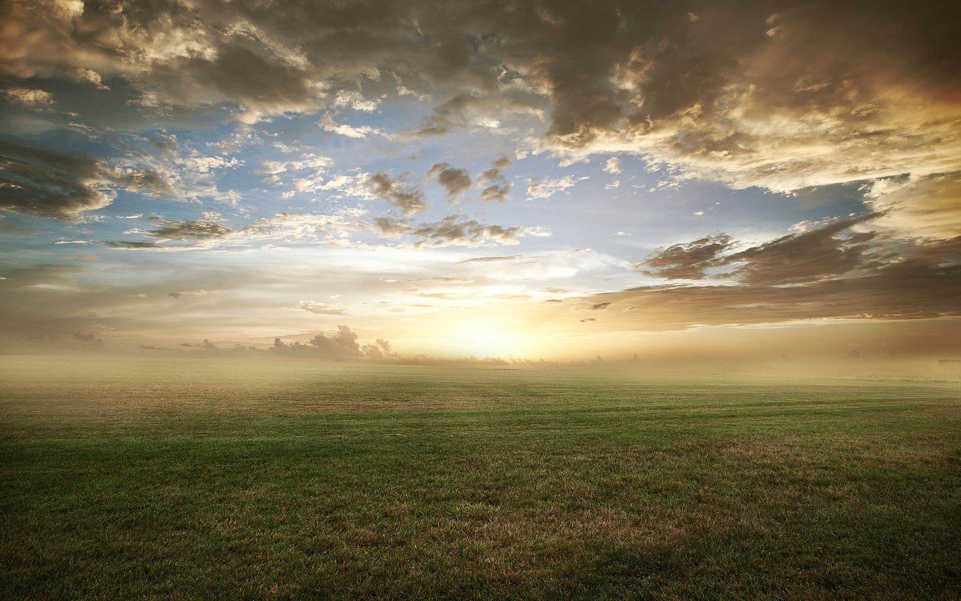 grass wallpaper foggy