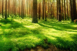grass wallpaper forest