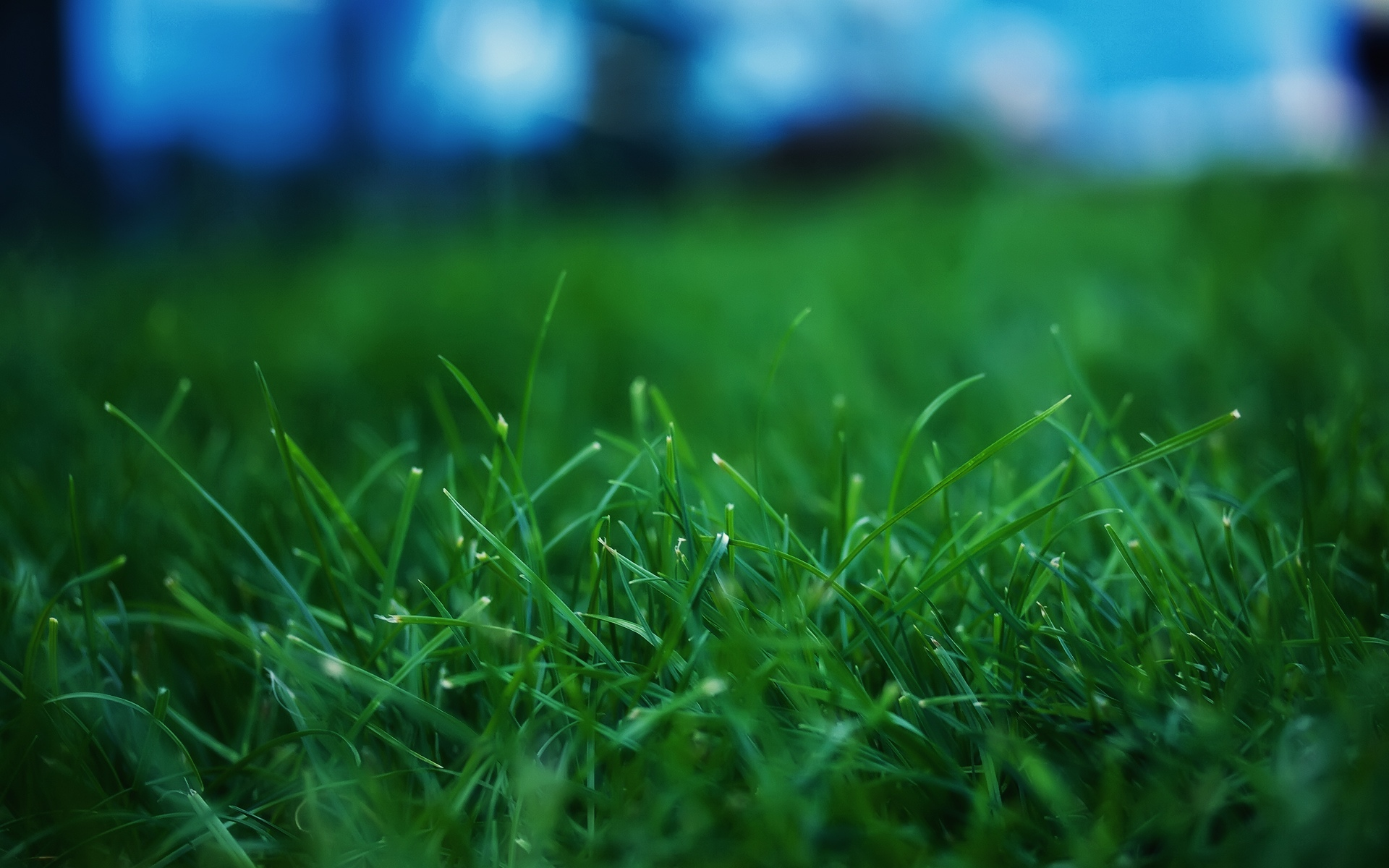 grass wallpaper full hd