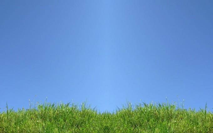 grass wallpaper green blue