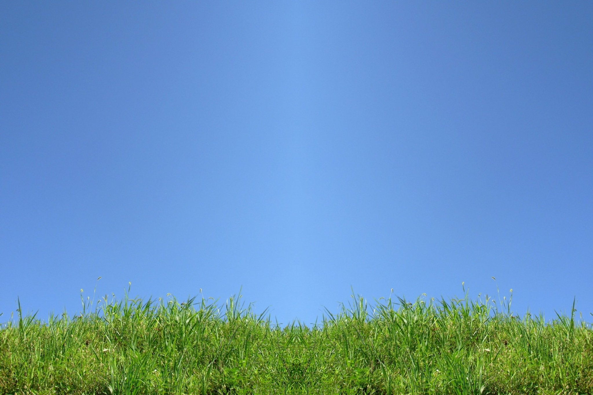 grass wallpaper green blue