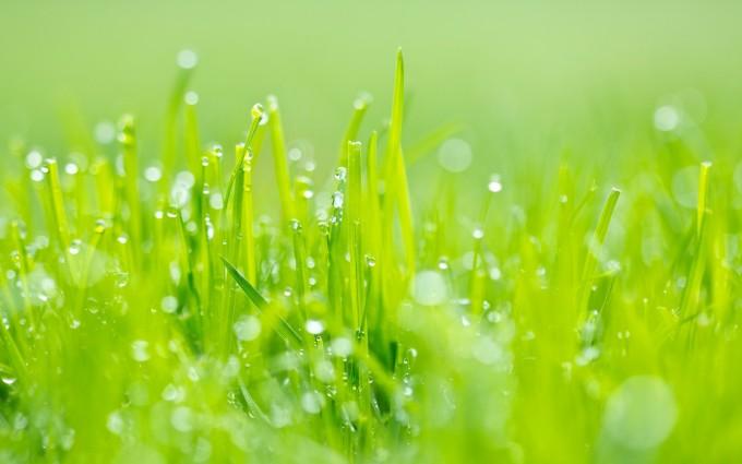 grass wallpaper green hd