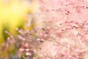 grass wallpaper hd background