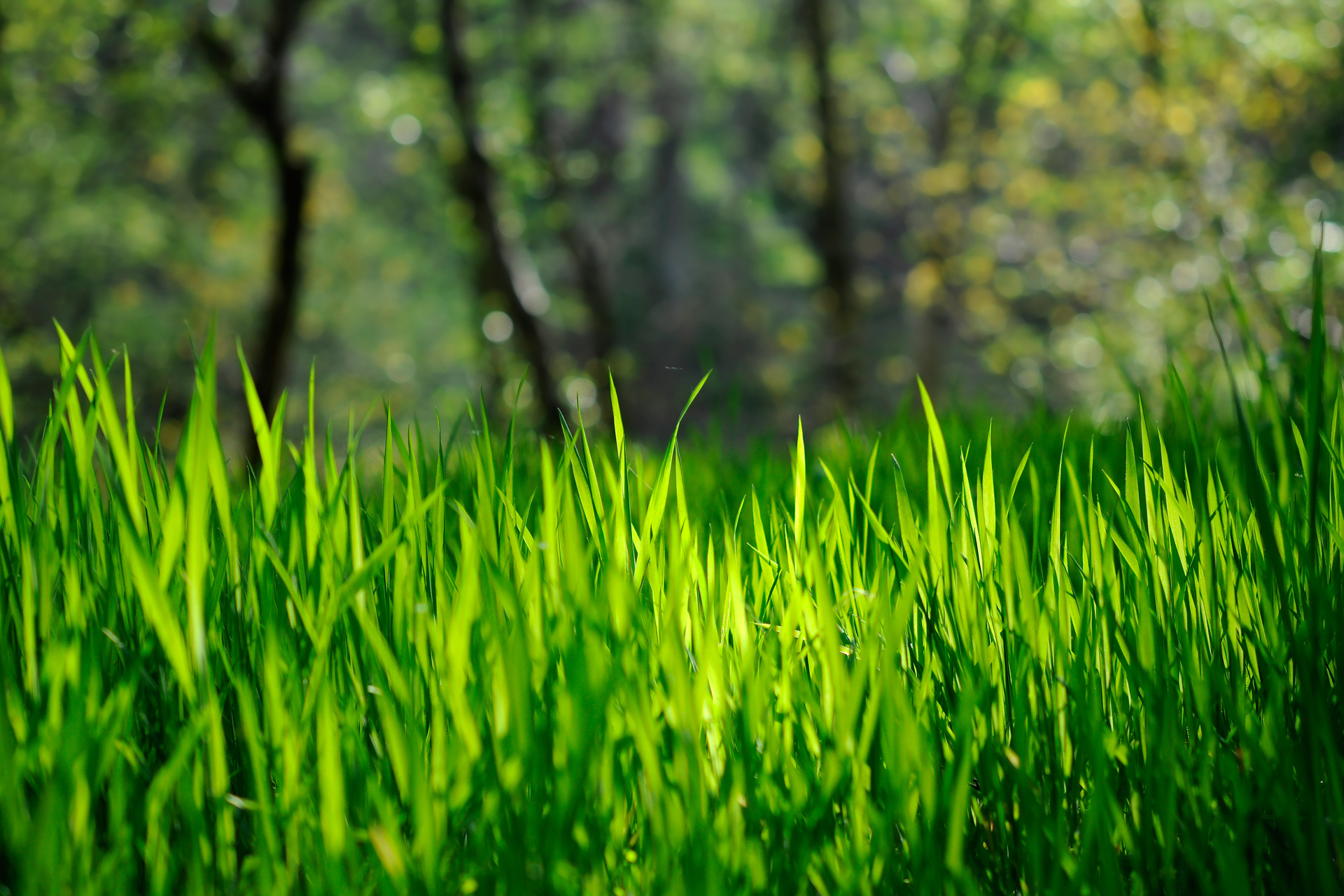 grass wallpaper hd