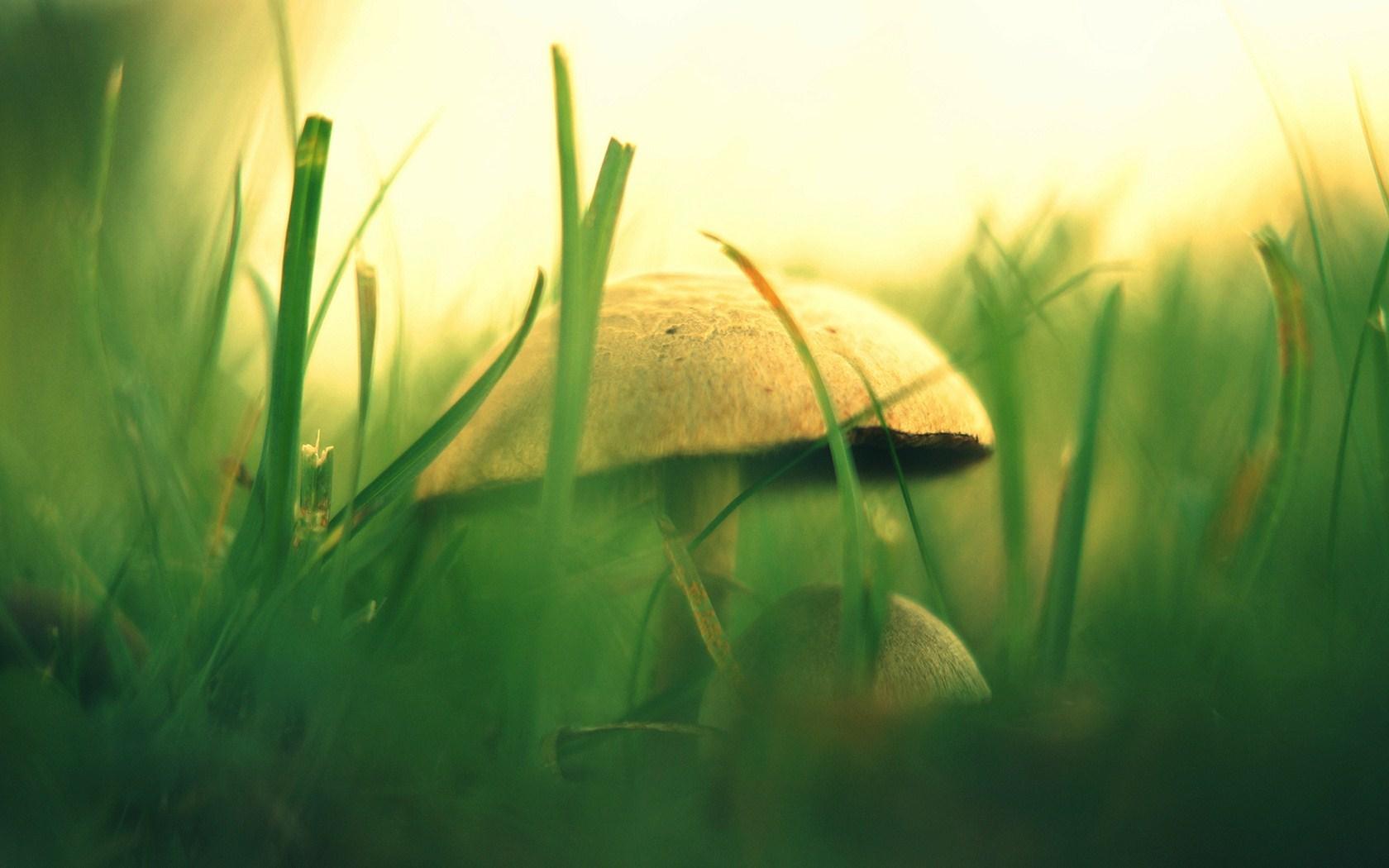 grass wallpaper mushroom