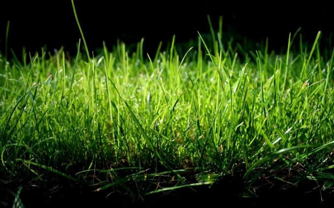 grass wallpaper night dark