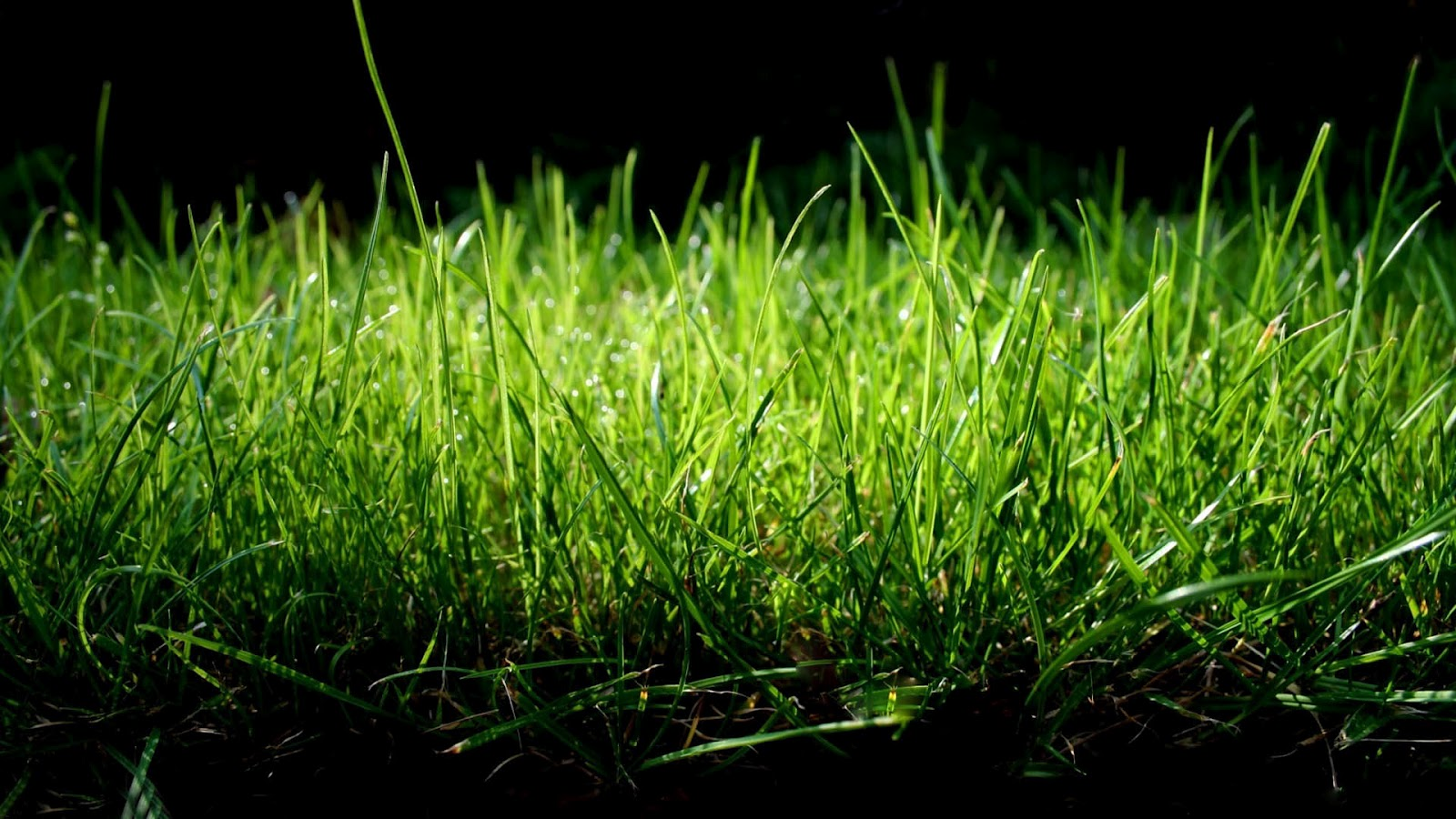 grass wallpaper night dark